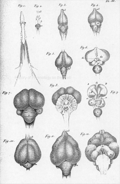 History Of Phrenology On The Web